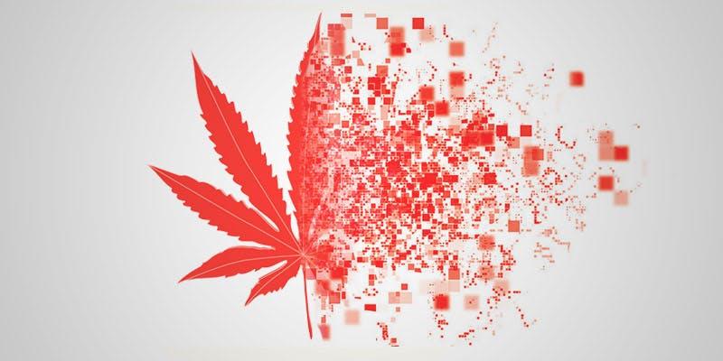 canadian govt quiz hero Will Cannabis Be Seen As Medicine Under New International Law?