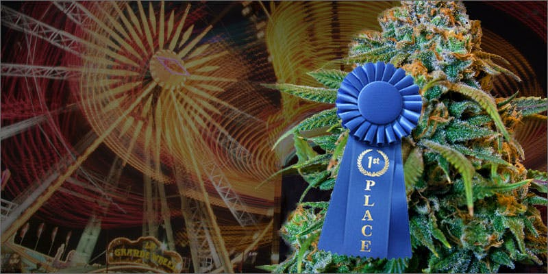 cannabis being shown at state fair ribbon plant hero 1 This Is How Long Nate Diaz Could Be Banned For Vaping