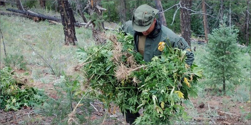 1 biggest marijuana busts forest 5 Insanely Huge Weed Busts That Will Make Your Head Spin