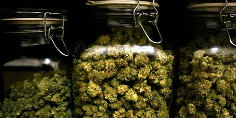 10 basic questions for weed noobs jars State Of Marijuana: The Most Important Cannabis Event This Year