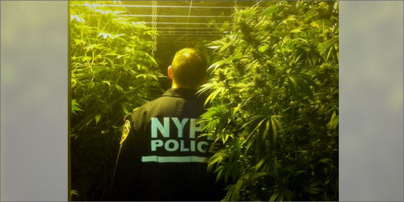2 biggest marijuana busts nycpd Michigan Govenor Takes Initiative With State Medical Progam