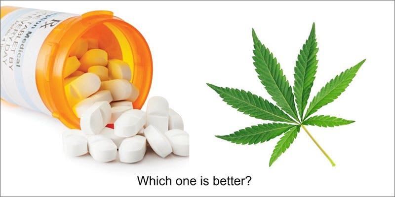 2 veterans hope washington ptsd opiate cannabis versus 1 Veterans for Compassionate Care Need YOU for New Study