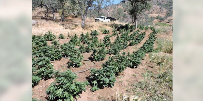 3 biggest marijuana busts grow 5 Insanely Huge Weed Busts That Will Make Your Head Spin