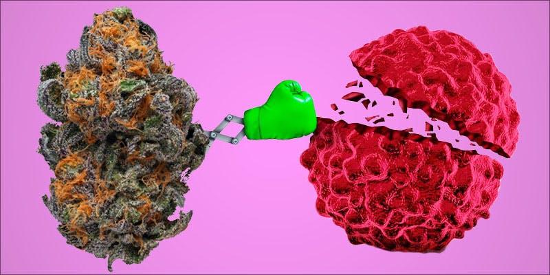 Cannabis Kills Cancer