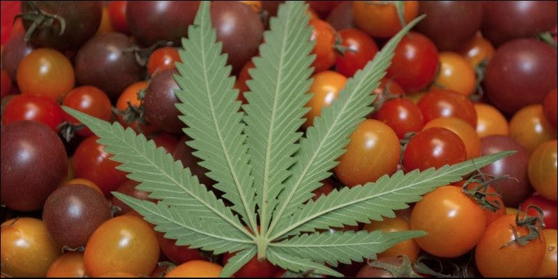 5 Reasons You Need To Be Fertilizing 2 State Of Marijuana: The Most Important Cannabis Event This Year
