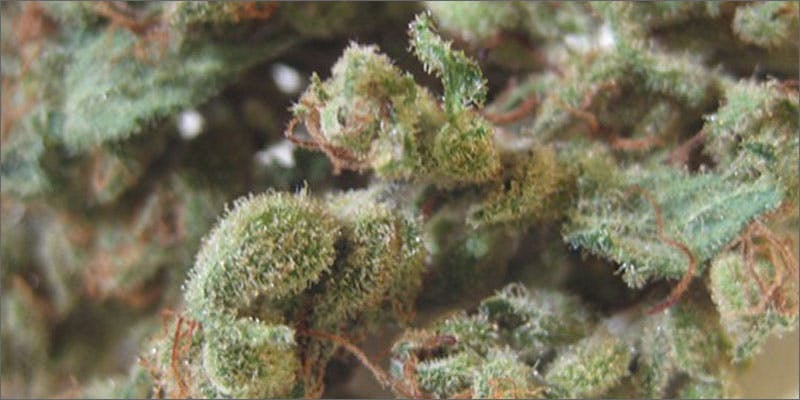 5 best strains cannabis pain relief closeup Cannabis And Sex: How Much Do You Really Know?