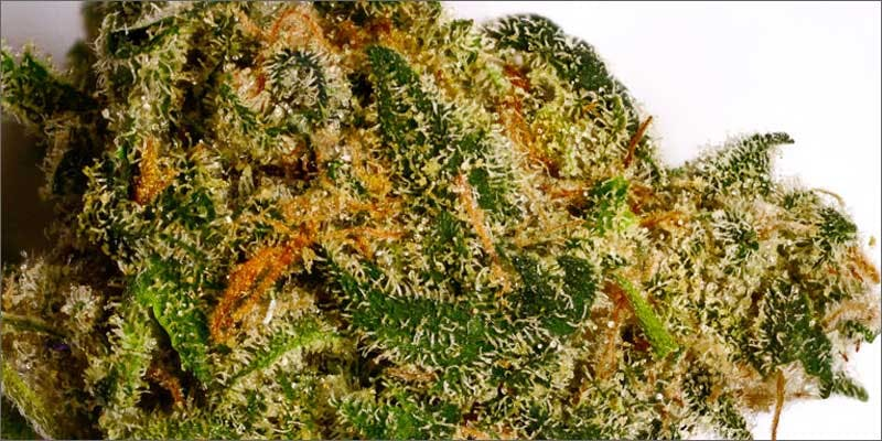 7 best strains cannabis pain relief afghan kush Cannabis And Sex: How Much Do You Really Know?