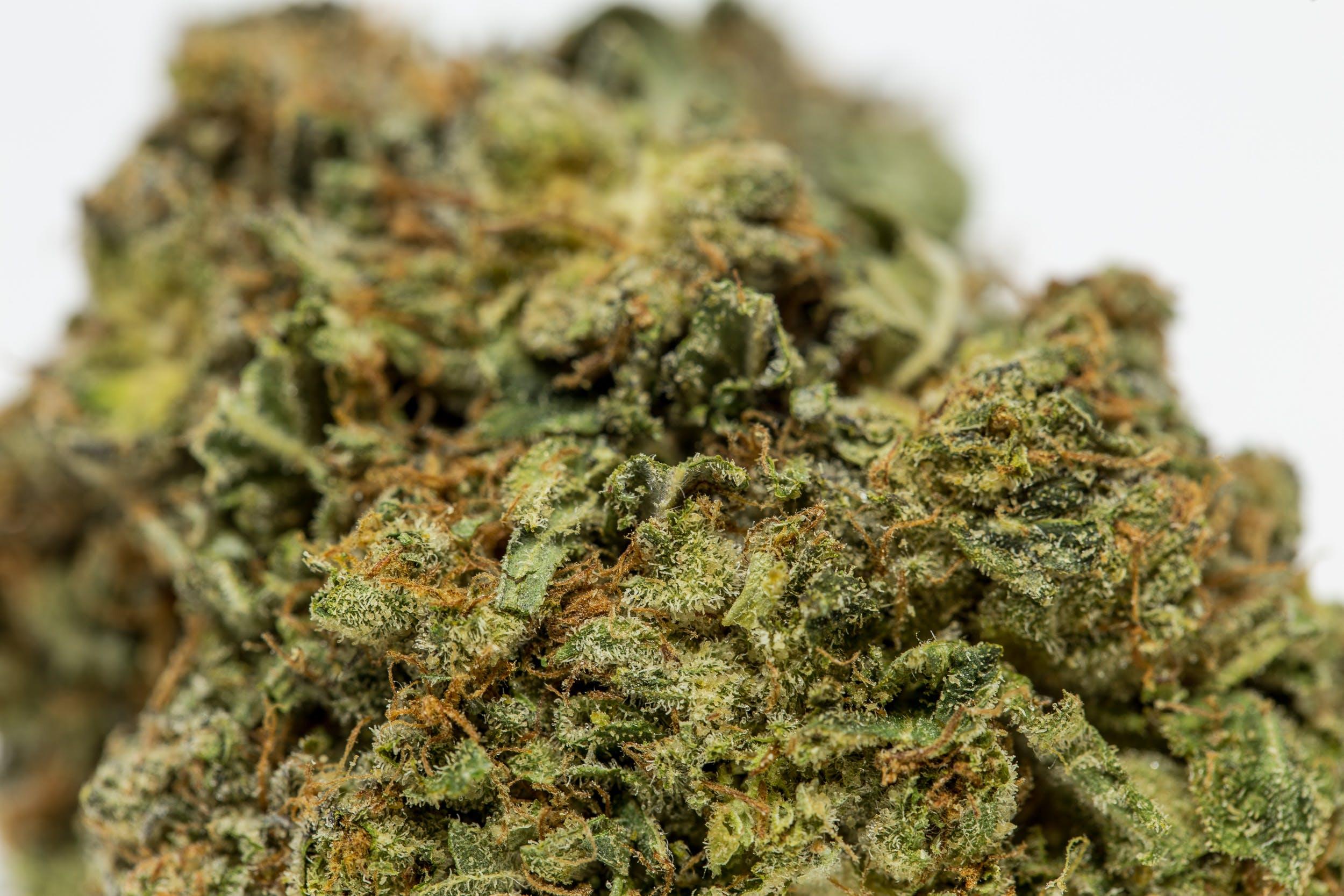 Alaskan Thunder Fuck Weed; Alaskan Thunder Fuck Cannabis Strain; Alaskan Thunder Fuck Sativa Marijuana Strain