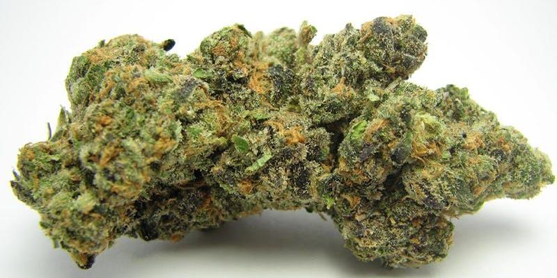 Animal Cookies Weed; Animal Cookies Cannabis Strain; Animal Cookies Hybrid Marijuana Strain