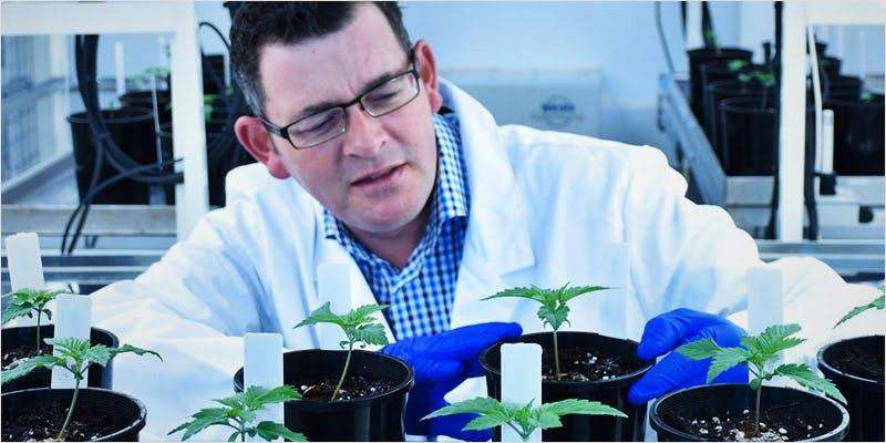 Australia's First Medicinal Marijuana 1 State Of Marijuana: The Most Important Cannabis Event This Year