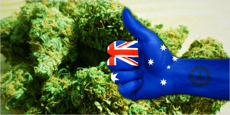 Medicinal Cannabis Crop