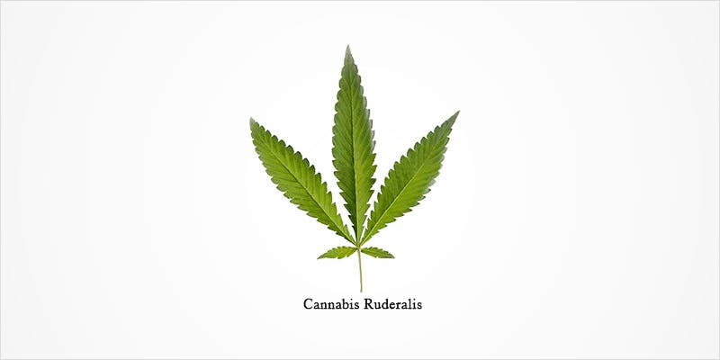 Cannabis Ruderalis 1 State Of Marijuana: The Most Important Cannabis Event This Year