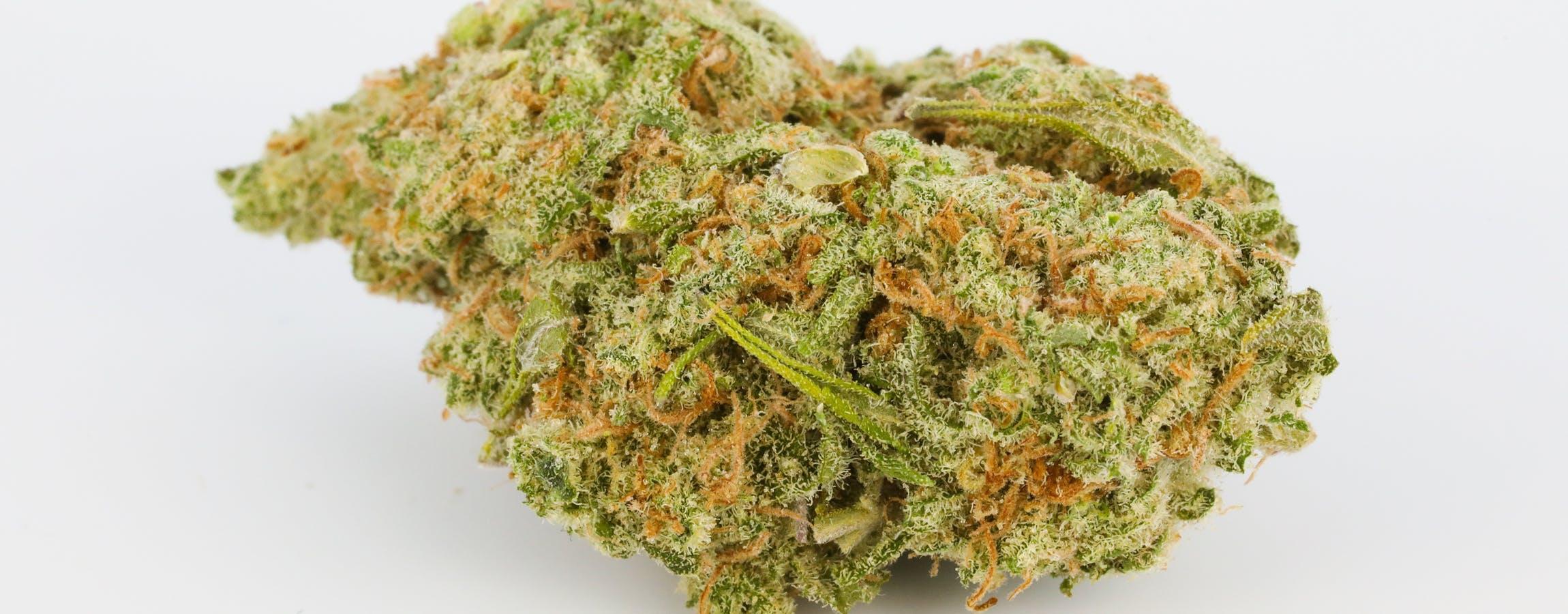 Dutch Treat Weed Strain ; Dutch Treat Cannabis Strain ; Dutch Treat Hybrid Marijuana Strain