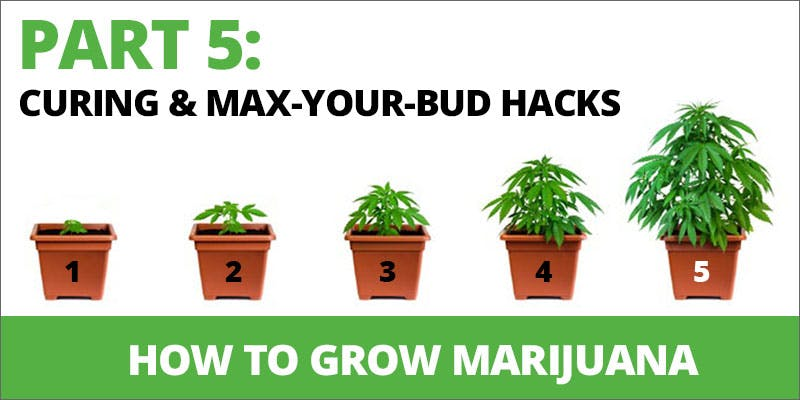 Growing Weed Then You Need 5 1 State Of Marijuana: The Most Important Cannabis Event This Year
