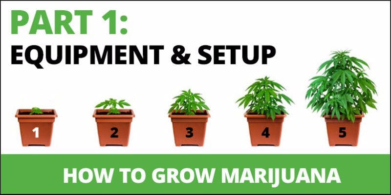 How to grow cannabis 1 State Of Marijuana: The Most Important Cannabis Event This Year