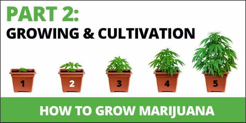 How to grow cannabis 10 State Of Marijuana: The Most Important Cannabis Event This Year