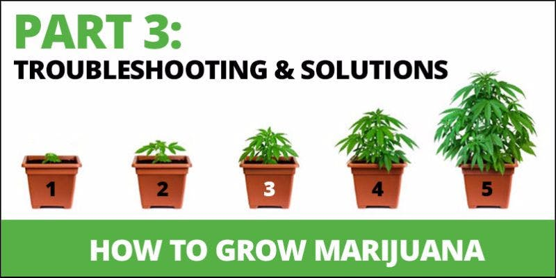 How to grow cannabis 15 State Of Marijuana: The Most Important Cannabis Event This Year