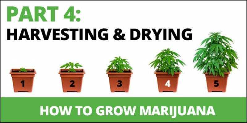 How to grow cannabis 16 State Of Marijuana: The Most Important Cannabis Event This Year