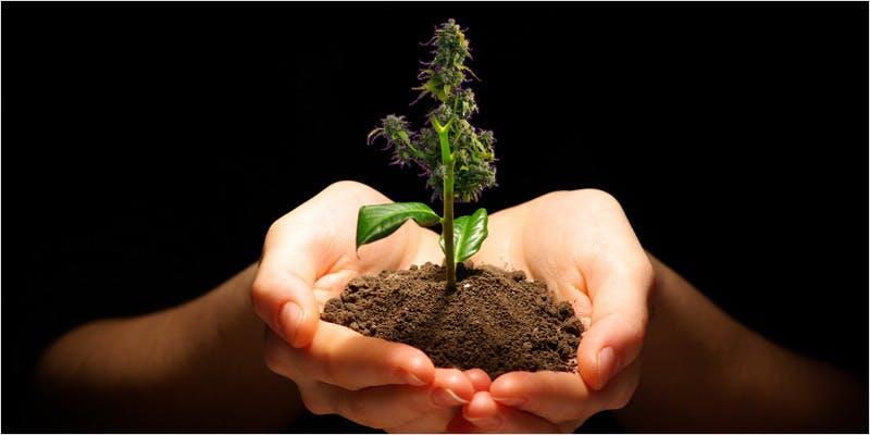 Grow The Best buds