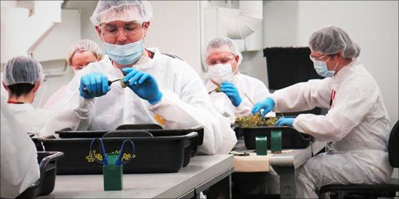 In Cannabis Politics 2 Michigan Govenor Takes Initiative With State Medical Progam