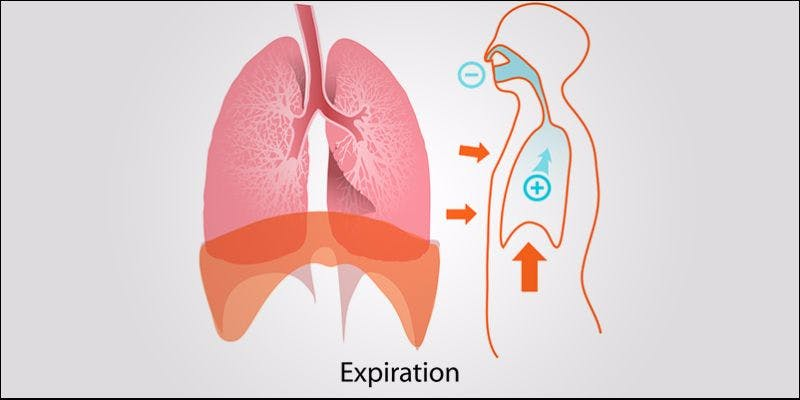 Keeping Your Lungs Healthy 3 Cannabis And Sex: How Much Do You Really Know?