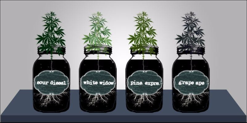 Ultimate Guide To Cloning 5 Cannabis And Sex: How Much Do You Really Know?