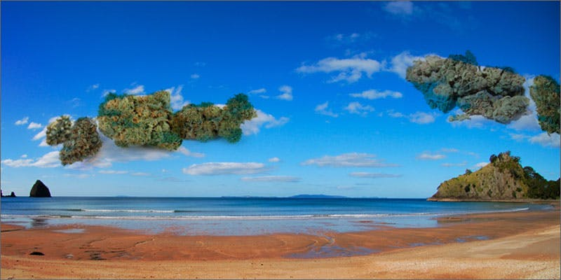 Weed-Friendly Beaches