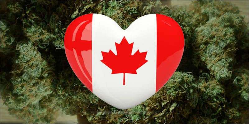 canadian cannabis study hero 10 Best Indica Strains To Round Off Your 420 Celebrations