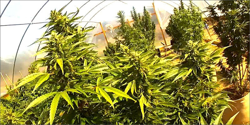 depletion State Of Marijuana: The Most Important Cannabis Event This Year