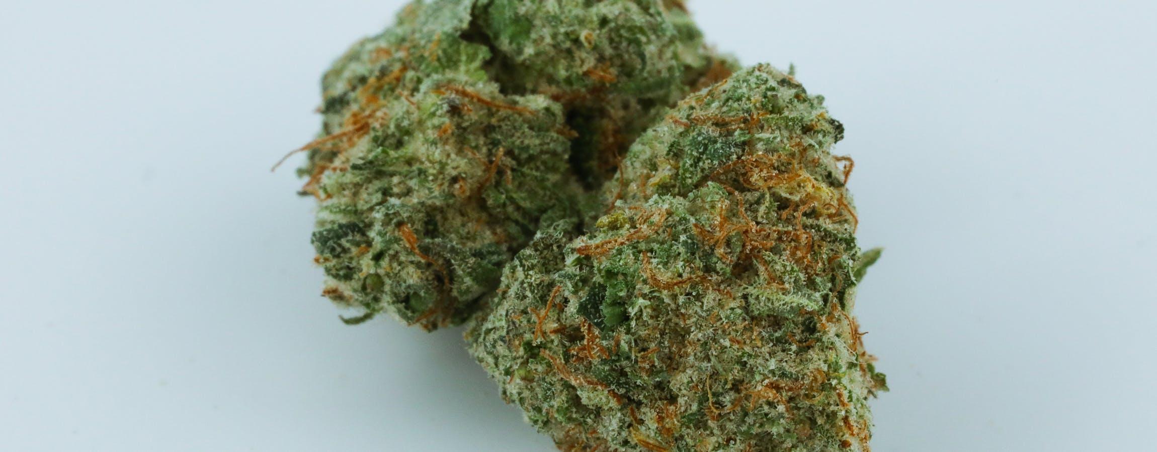 G13 Cannabis Strain ; G13 Weed Strain ; G13 Marijuana Strain ; G13 Indica Hybrid