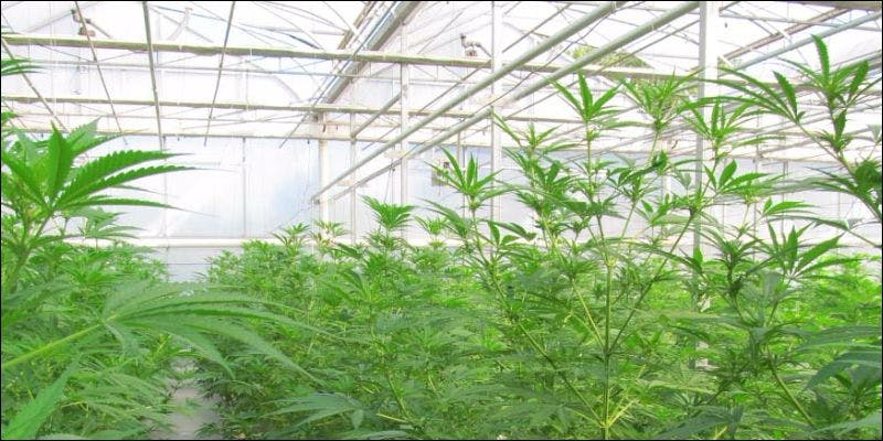 medical cannabis in australia 3 State Of Marijuana: The Most Important Cannabis Event This Year