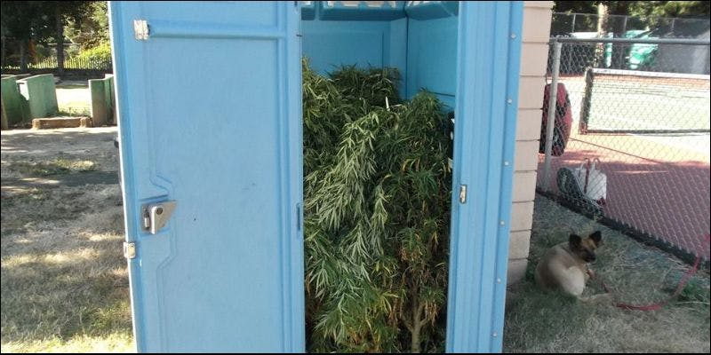 weed filled portable toilet 1 This Is How Long Nate Diaz Could Be Banned For Vaping