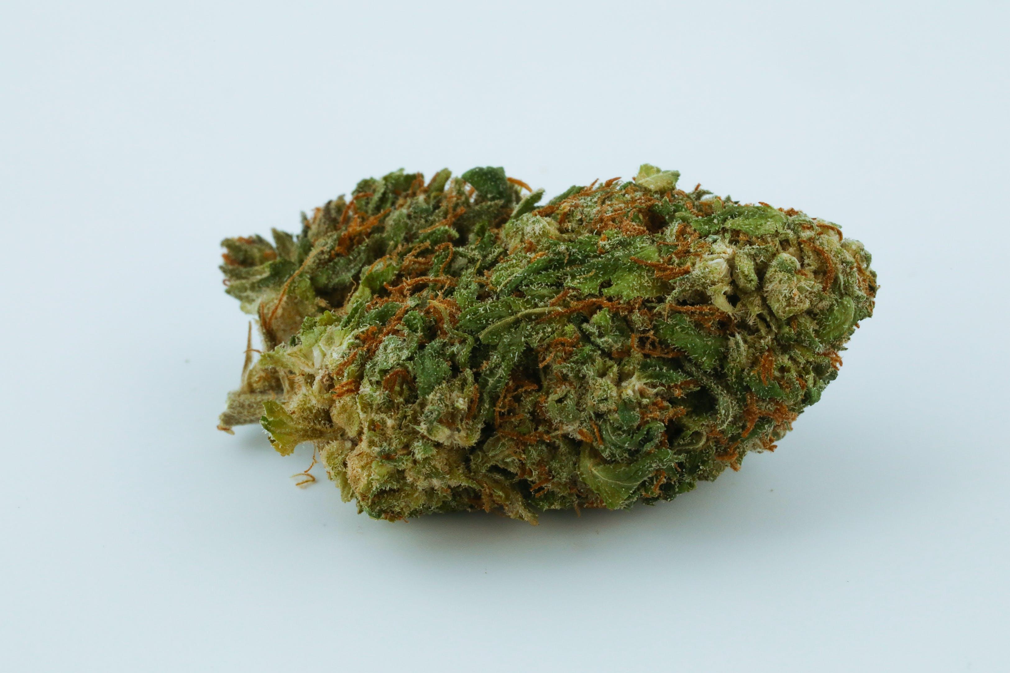 UK Cheese Weed; UK Cheese Cannabis Strain; UK Cheese Hybrid Marijuana Strain