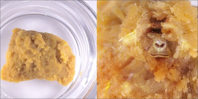 1 harambe og strain crumble This Dominos Driver Delivered More Than Just Pizza