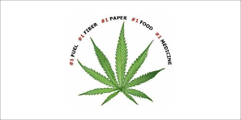 2 colorado creates first domestic hemp seed leaf This Dominos Driver Delivered More Than Just Pizza