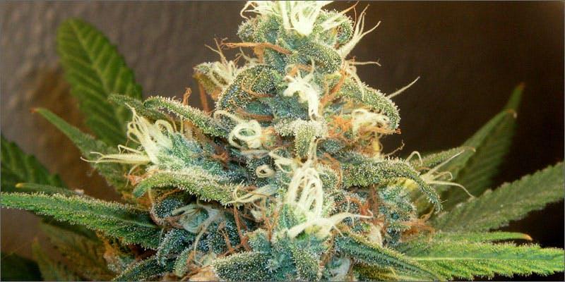 Whole Plant Medicine
