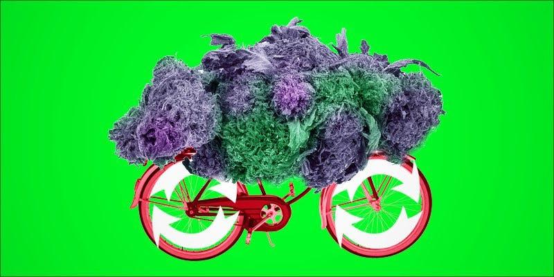 Cannabinoid Cycling