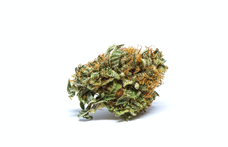 Critical Mass Weed; Critical Mass Cannabis Strain; Critical Mass Indicia Marijuana Strain