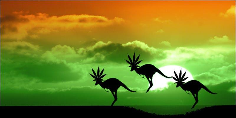 medical cannabis australia