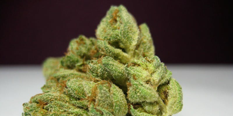 10 Most Popular Cannabis Strains Smoked On 420 | Herb