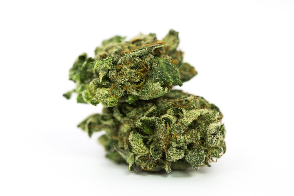 Sensi Star Weed; Sensi Star Cannabis Strain; Sensi Star Indica Marijuana Strain