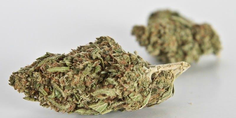 Silver Haze Weed; Silver Haze Cannabis Strain; Silver Haze Hybrid Marijuana Strain