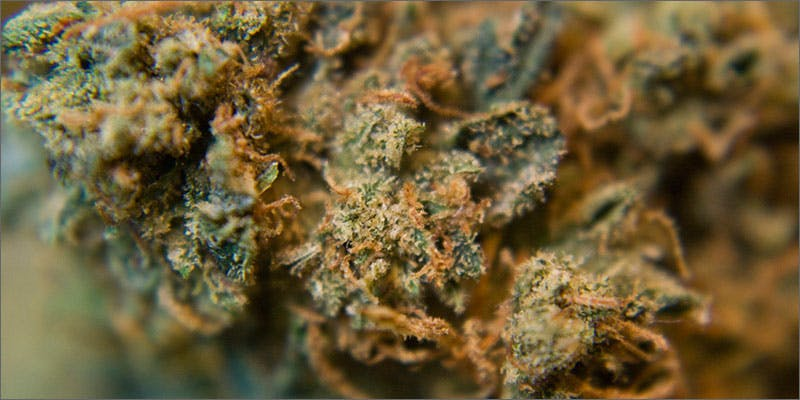 1 halloween themed cannabis strains ghost og To Put It Bluntly, You Need To Watch This New Women & Weed Show