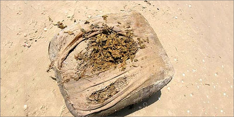2 cannabis washes up florida beaches Man Walked Free From Court Over Medical Cannabis Charges