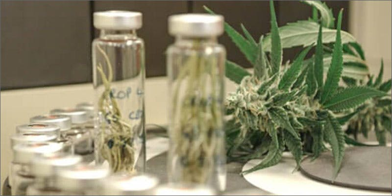 2 colorado cannabis potency continues rising Man Walked Free From Court Over Medical Cannabis Charges
