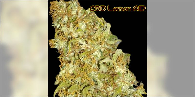 3 ways to know strain perfect grow lemon aid Cannabis Infused Roasted Red Potatoes Will Rock Your Dinner Table