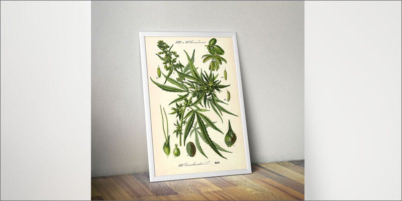 6 accessories women support legalization print Cannabis Infused Roasted Red Potatoes Will Rock Your Dinner Table