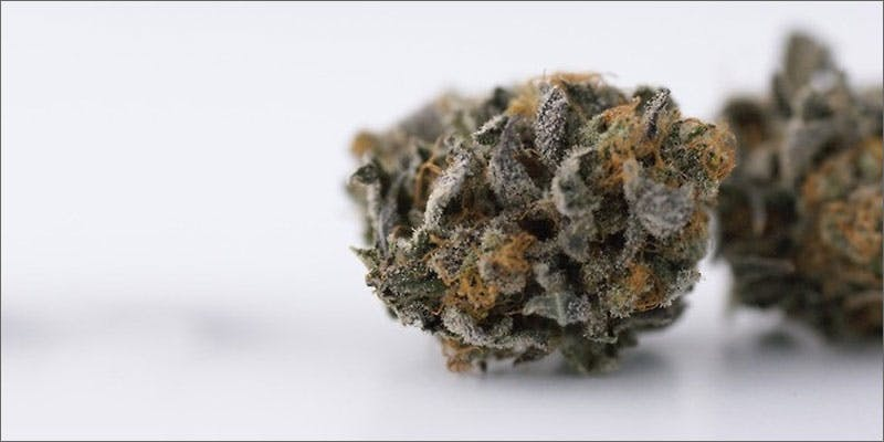 6 halloween themed cannabis strains black widow To Put It Bluntly, You Need To Watch This New Women & Weed Show