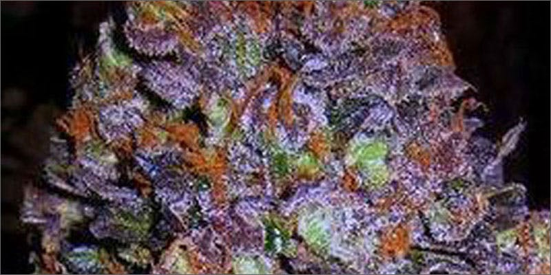 6 ways to know strain perfect grow purple Cannabis Infused Roasted Red Potatoes Will Rock Your Dinner Table