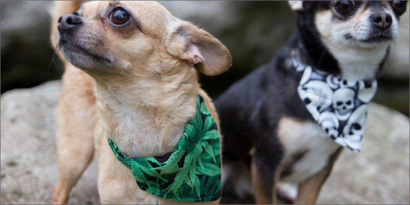 8 cannabis products for pets 5 Genius Weed Smoking Accessories You Didnt Know You Needed